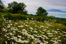 Grace Ashram meadow