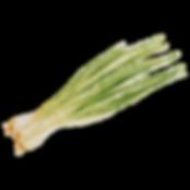 Cebolleta