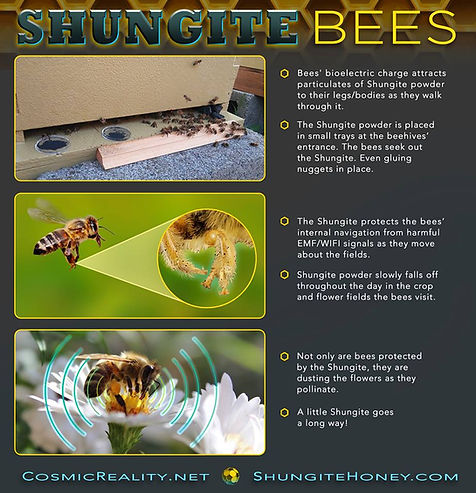 Shungite | Shungite Beehives | United States
