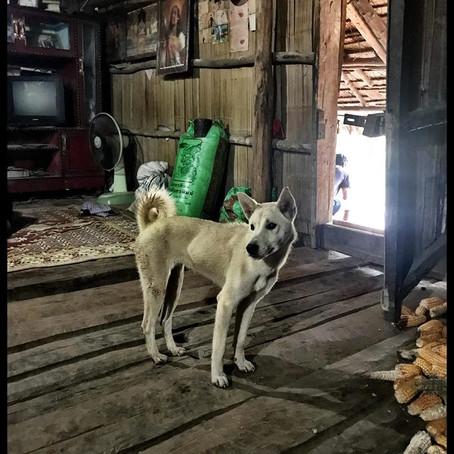 DOI DOGS    (MOUNTAIN DOGS) BY DERYA