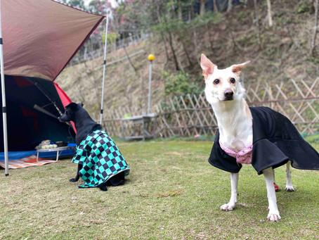 桃園營地露薩Lusa露營區|一個人帶狗去露營