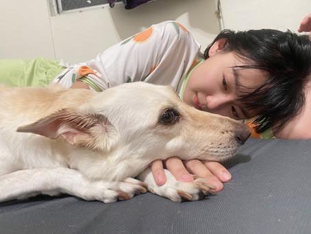 努比|狗淋巴癌治療紀錄