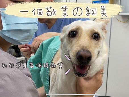 寵物幹細胞紀錄分享|關節炎舒緩·髖關節發育不全