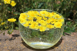 Aromatherapy and Flower Essences: What's the Difference?