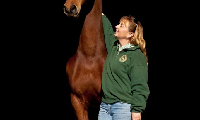 Robertson Equine Sales