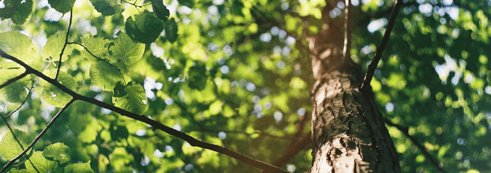 Baum_gespiegelt.jpg