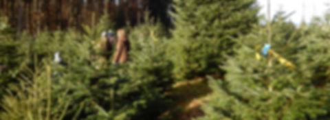 Weihnachtsbaumverkauf_1920x701px.jpg