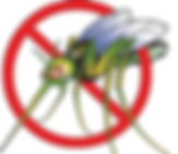 link to mosquito info