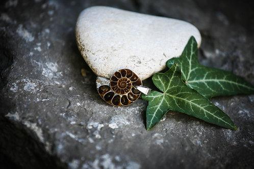 Prise de conscience et enracinement l Ammonite