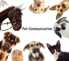 pet%20communication_edited.jpg