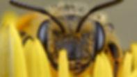 Bee-hiding-696x392.jpg