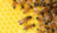 China-Loses-Less-Honey-Bees-Than-US-Euro