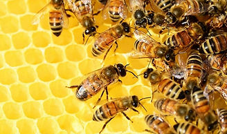 China-Loses-Less-Honey-Bees-Than-US-Euro