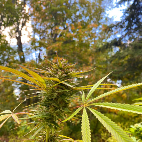 What is a Terpene?