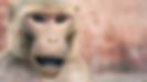 Screen Shot 2020-03-13 at 17.03.41.png