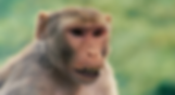 Screen Shot 2020-03-13 at 17.05.33.png