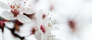 flower-673296_1920.jpg