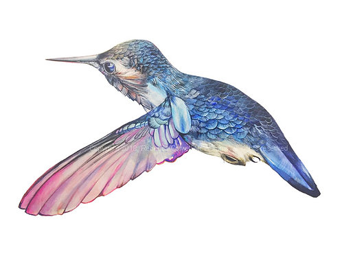 "Bee Hummingbird, 5.5"" x 9"" Limited Edition Print"