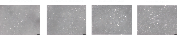 skin cell image@72x.png