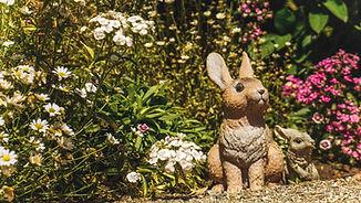 garden_photos-29.jpg