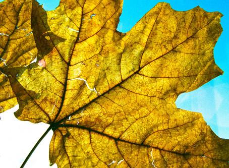 Mindful Of A Simple Leaf