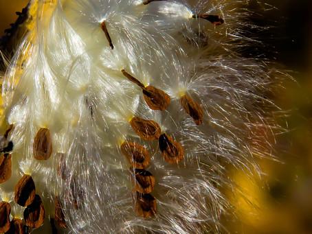 225 Seeds