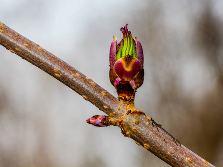 Promise of Spring