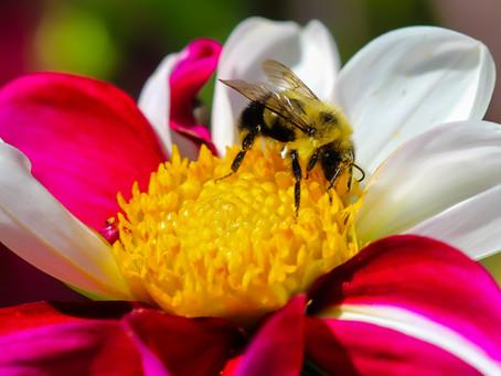 Bumblebee Naysayers
