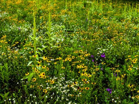 Prairie Restoration On Eighty Acres