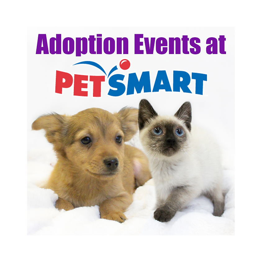 HSSC Adoption Event