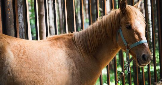 horses (1).jpg