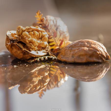 Manger des  noix, pour vous apporter du « bon gras »