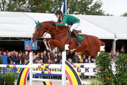 "Emerald van't Ruytershof X mother approved stallion "" Alaska Z """