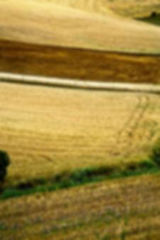 _MG_4528vcvfoto in visione.JPG