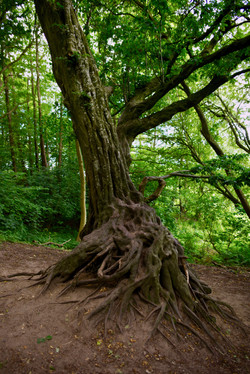 Rooted (Germany)