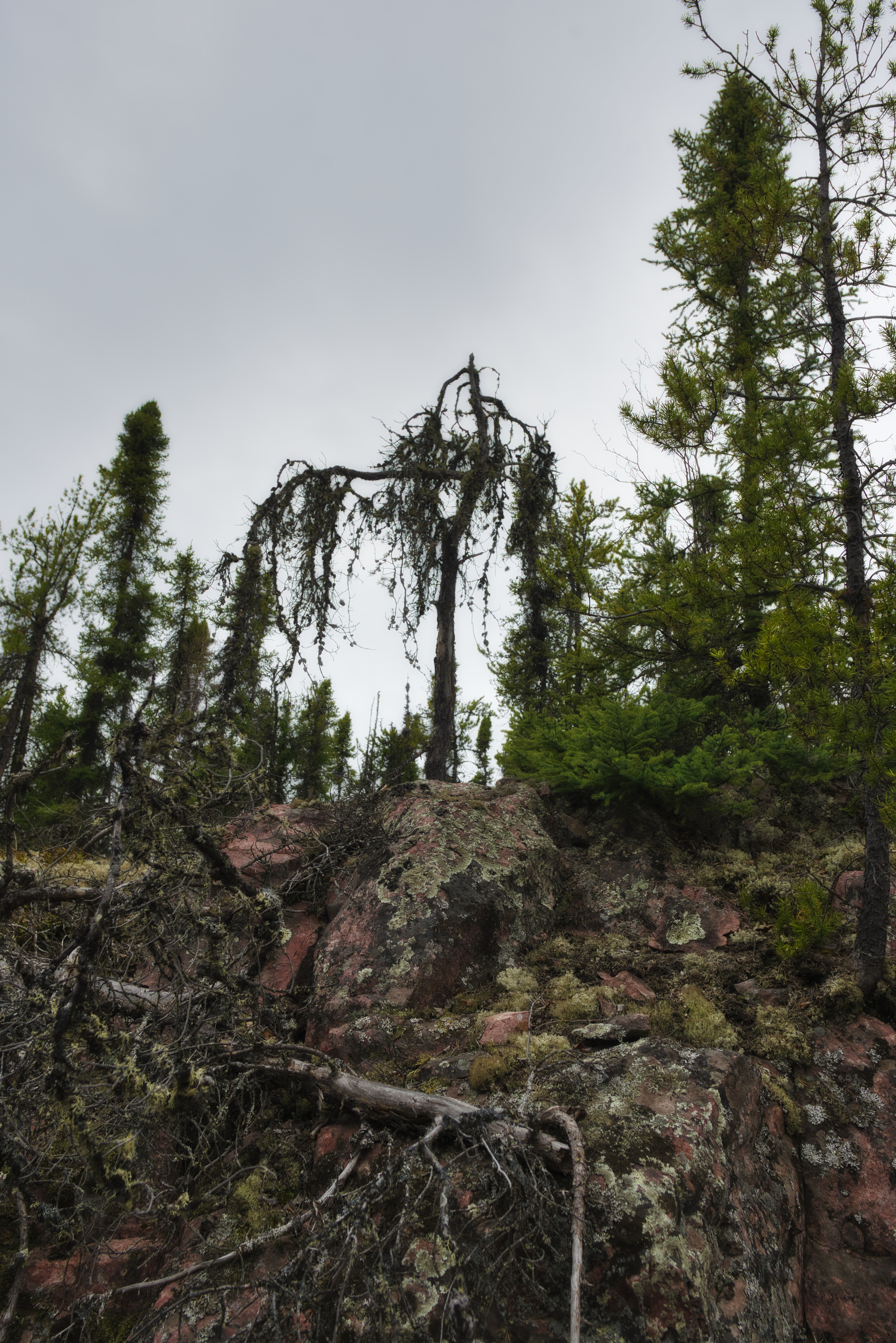 Unraked Forest, Uranium City