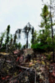 osprey bragg creek alberta