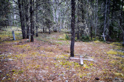 Forested Dead