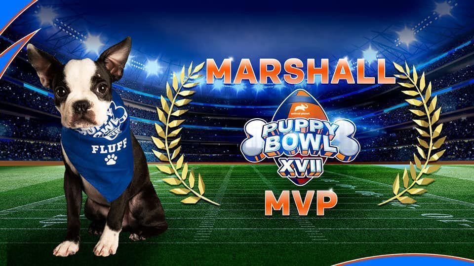 Marshall Puppy Bowl XVII MVP