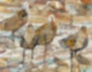 seabirdsWatching.jpg