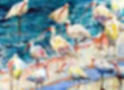 ibisAmongUs.jpg