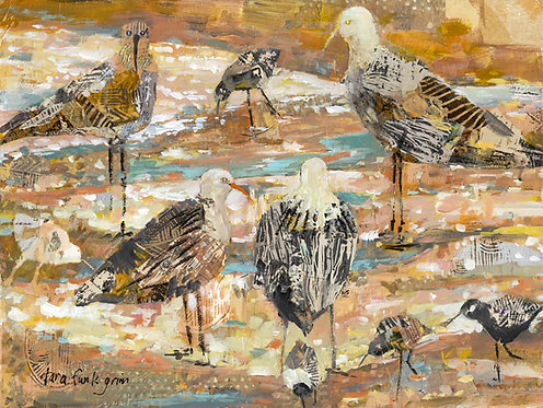 Seabirds Not Looking