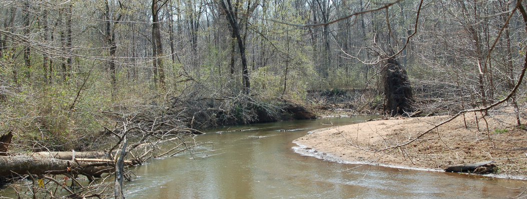 This 809-acre property protects 2 miles on the Apalachee River and 1.5 miles along Hard Labor Creek. The forest consist mostly of bottomland hardwoods along the waterways, with mixed hardwood-pine in the uplands.