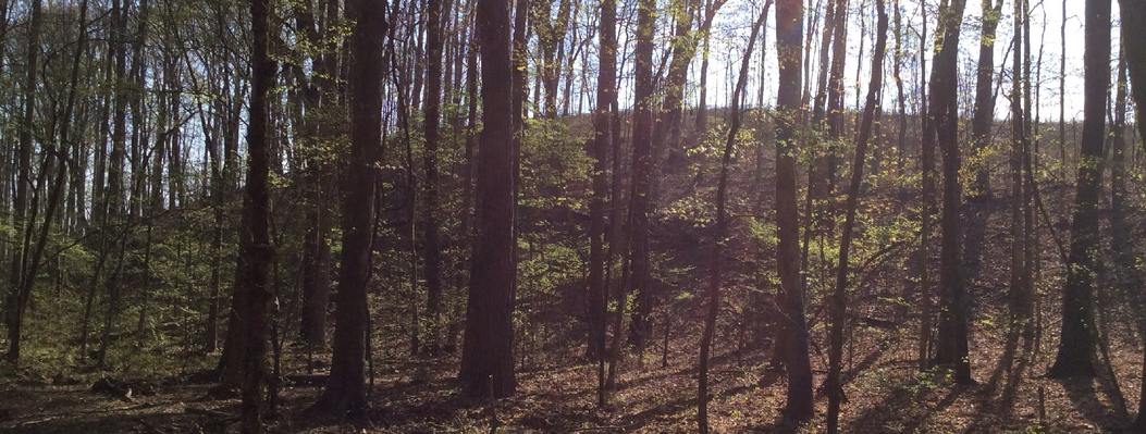 This 473-acre property protects wetlands along Macks Creek, a Broad River tributary, and adjoins over 2,000 acres of ORLT-protected land.  This diverse property features fresh water marshes, canebrakes, granite outcrops and mesic hardwood forests.