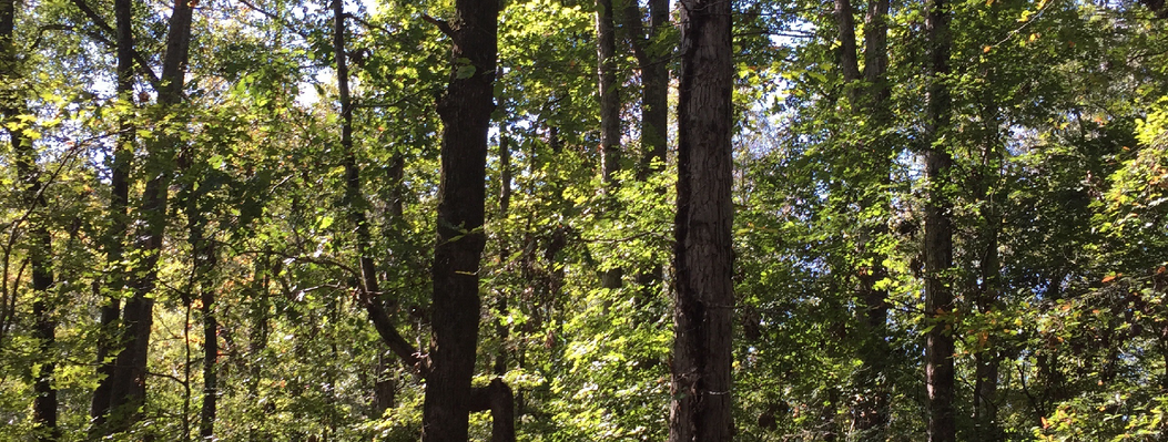 Many of the landowners who partner with ORLT protect hardwood oests dominated by oak and hickory trees whose nuts support populations of deer, squirrels and other wildlife.