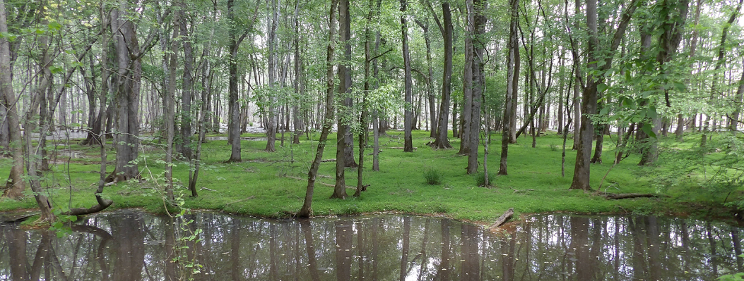 Besides providing a learning environment for students, this riverside property protects bottomland hardwood forests, marshes and open water that provides homes for otters, beavers, wading birds and songbirds.