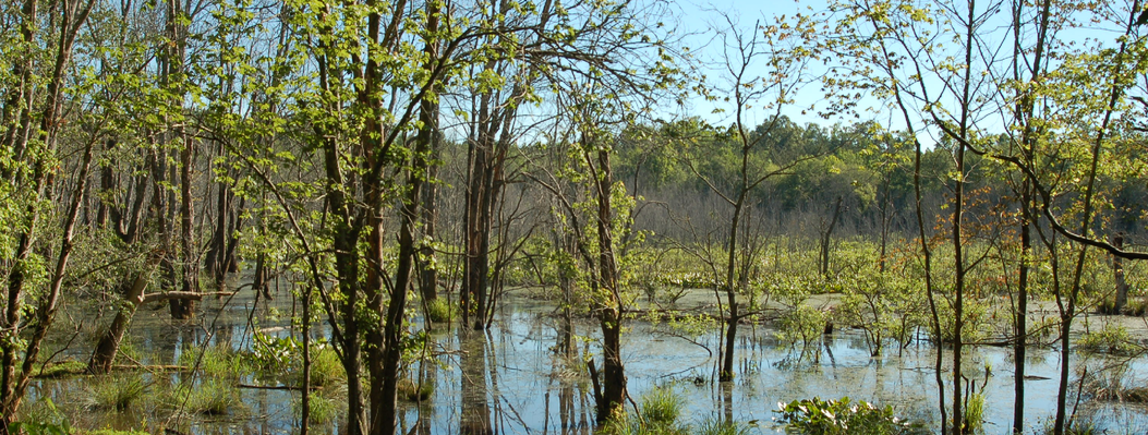 This large wetland along the Middle Oconee River serves as an outdoor classroom where public school students learn about wetland ecosystems.