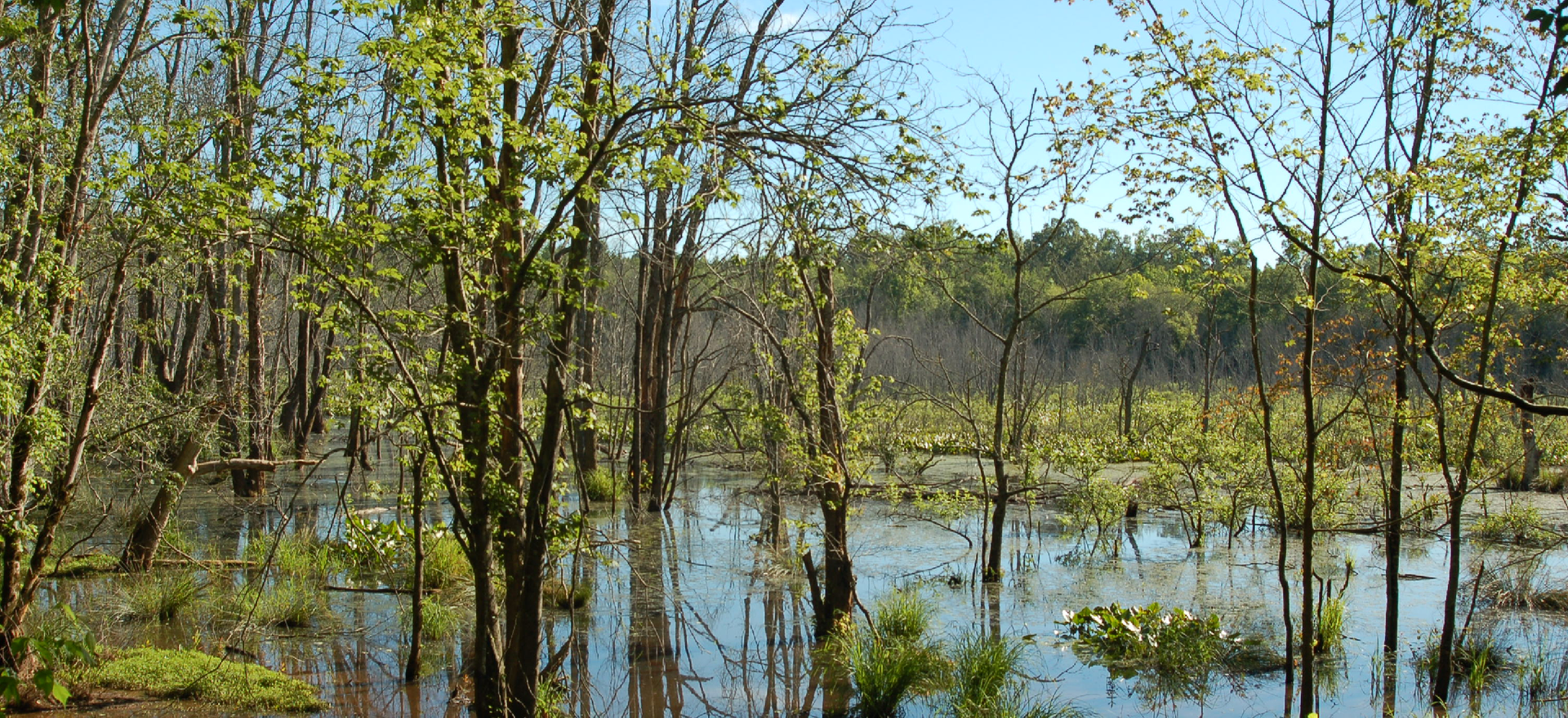Jefferson City Schools uses this 177-acre property on the Middle Oconee River to educate students about wetland ecosystems.  It features bottomland hardwood forests, swamps, marshes and open water that provides habitat for otters, beavers, wading birds, and songbirds - and even has a heron rookery.