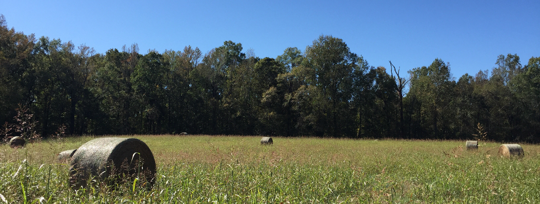 Landowners who partner with ORLT can continue well-managed farming operations while protecting sensitive habitats along streams and wetlands, or around granite outcrops.