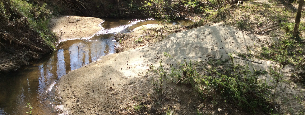 This diverse property along Macks Creek also protects smaller streams, like this sandy, clear-running tributary that winds through the forest.